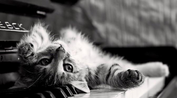 Le truc qui ne fait pas que dormir….